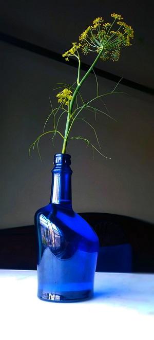 flower plant in glass bottle