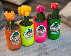 jars and flower plants